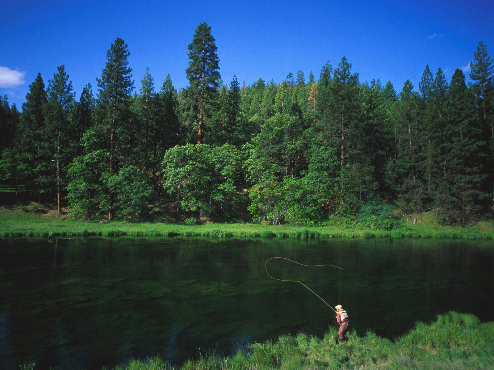 рыбалка прикормка для карася в домашних условиях