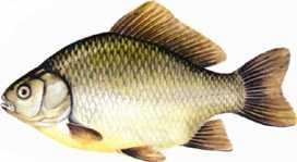 прикормка для хищных рыб
