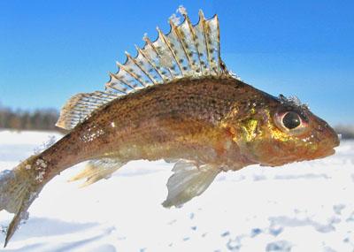 Обои о рыбалке на рабочий стол скачать бесплатно